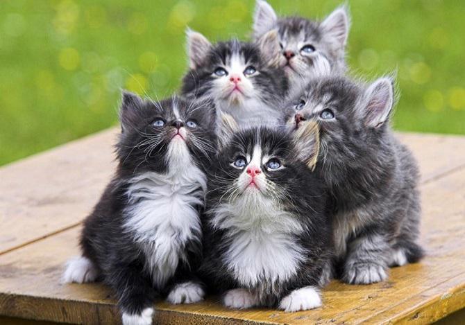 Bahaya Kucing Bagi Ibu Hamil